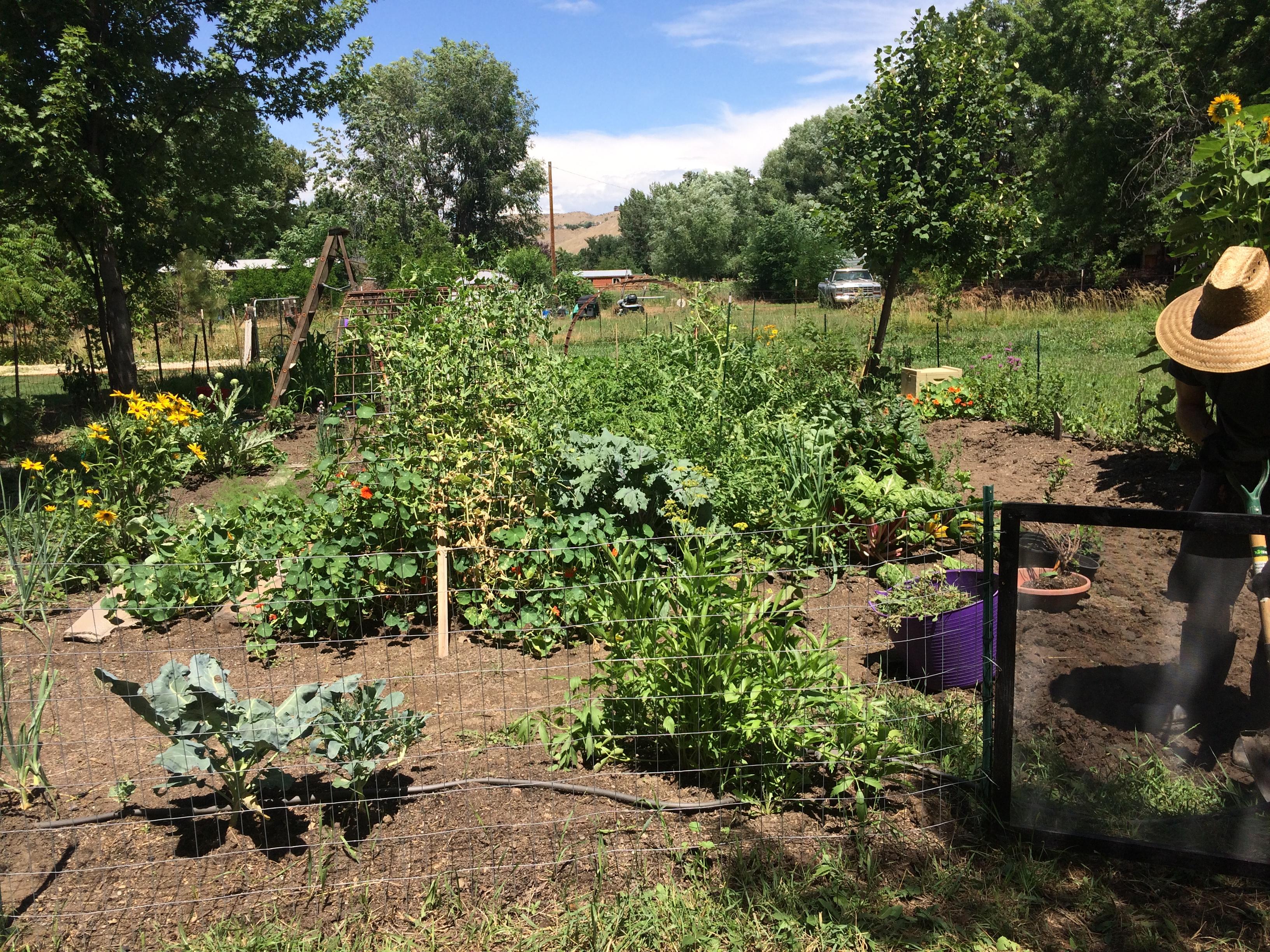 gardening laura m gibson